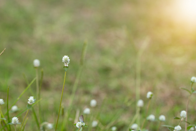 close-up-of-white-meadow-flowers-in-field-or-grass-flower_3249-1906.jpg