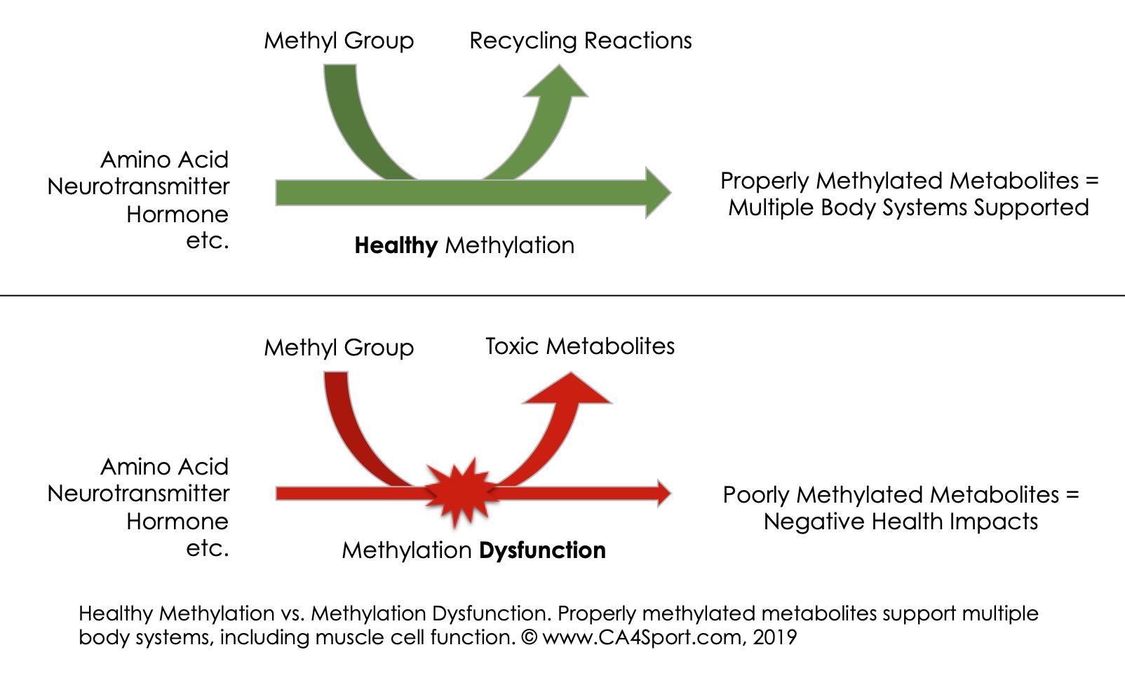 Methylation Reactions.png