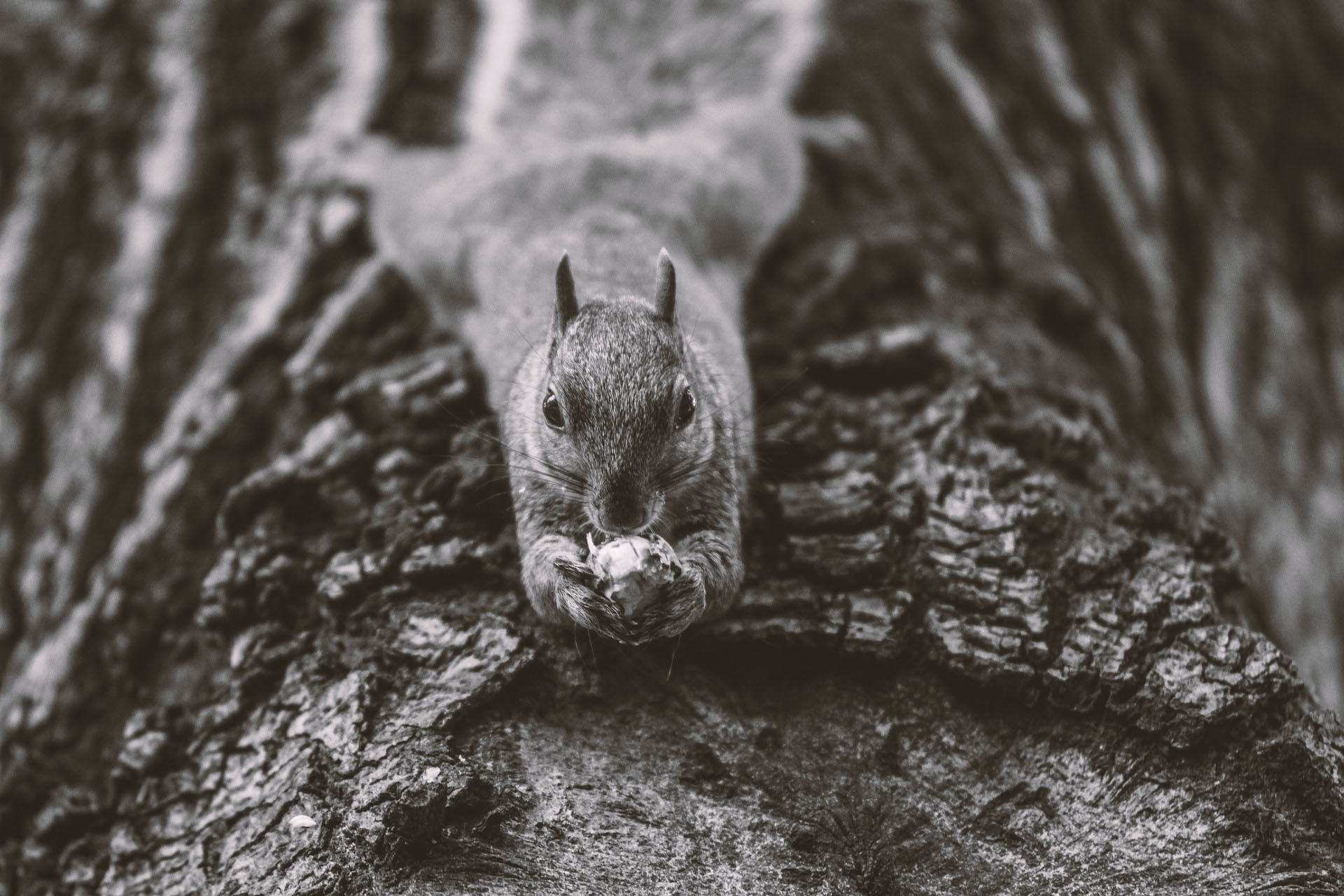 animal-1842152_1920.jpg
