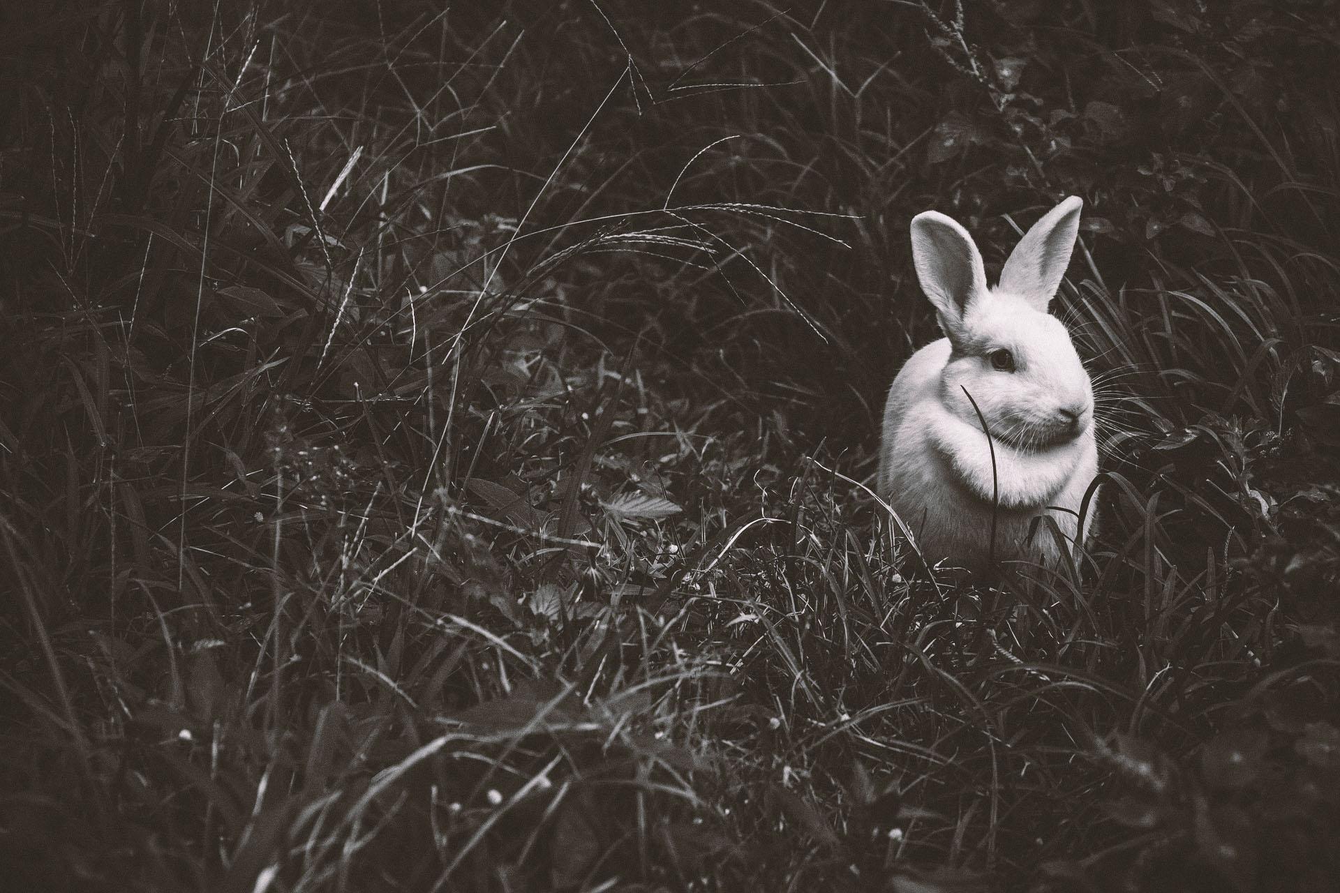 animal-1845263_1920.jpg