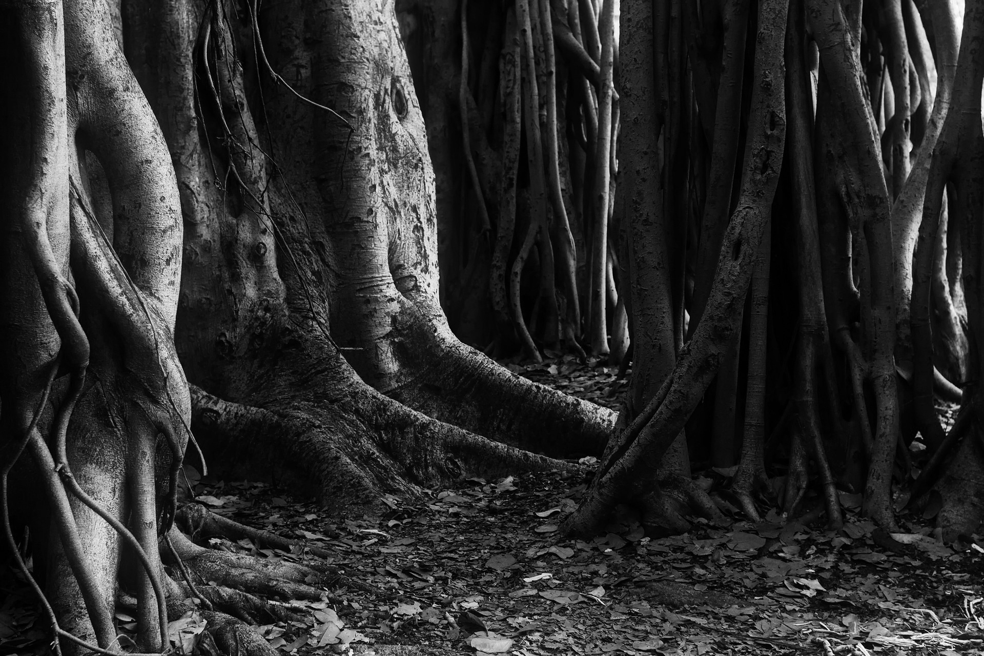 trees-2263344_1920.jpg