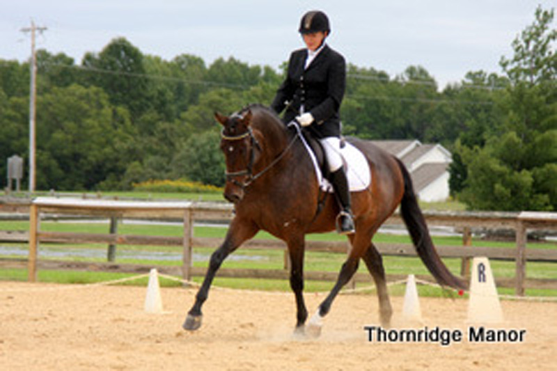 Phoebe & Windsong FV start showing Debut 2011