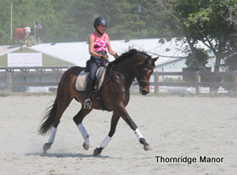Phoebe & Windy train & go non-compete after 2012 FL season
