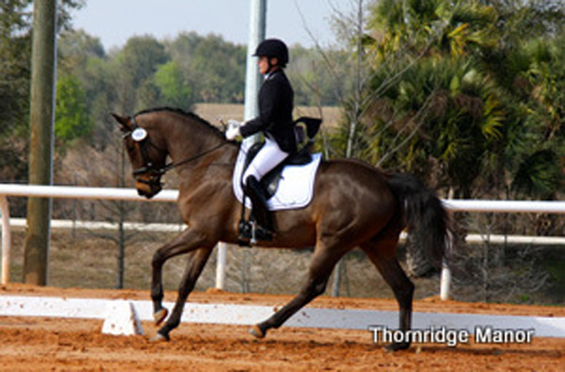 Phoebe & 3yo Veronica's first show- FL 2012 Undefeated