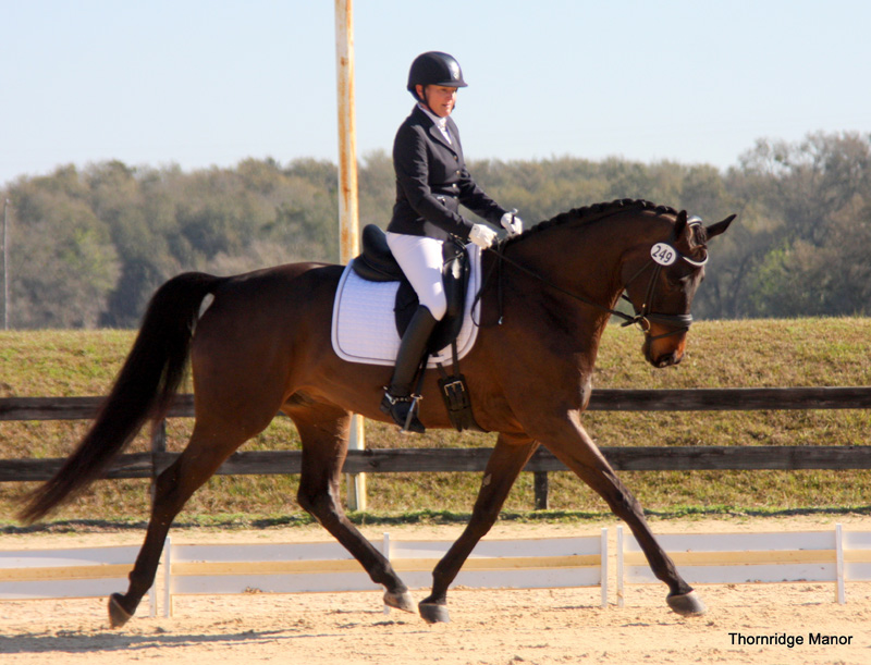 Phoebe & Londonderry Lad undefeated first show FL 2014