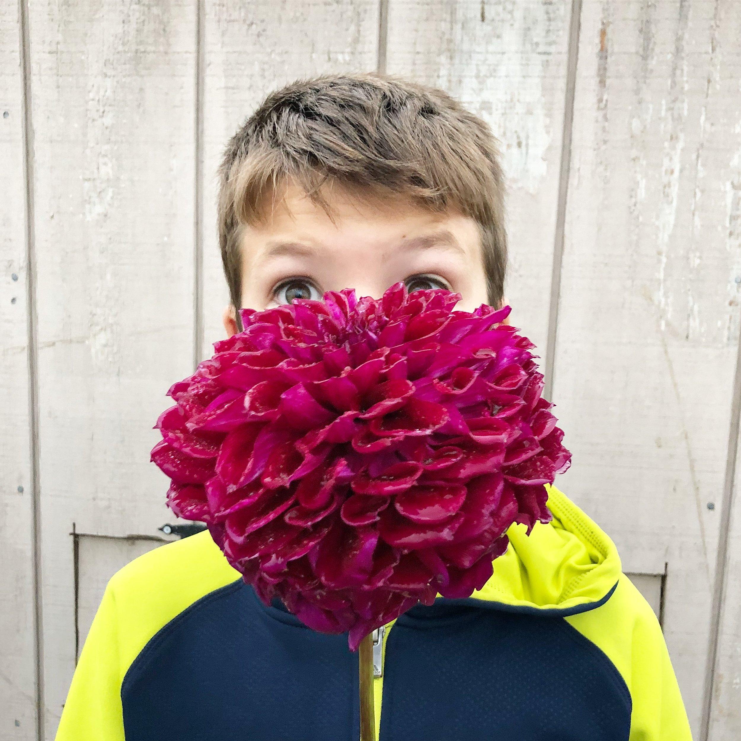 titus big flower best.JPG