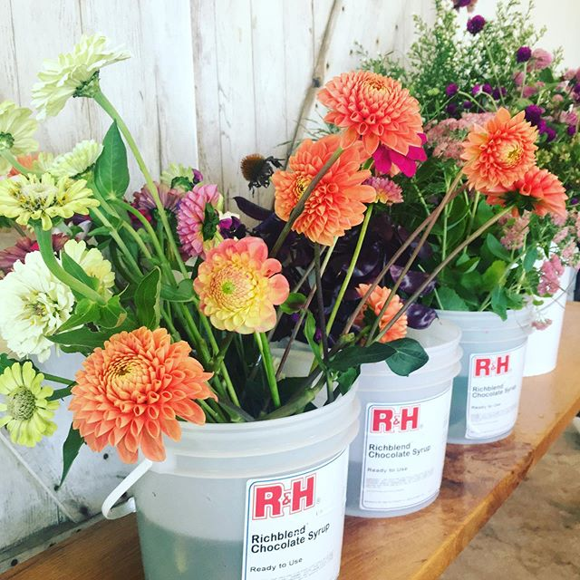 Flower grower 'problems' 😉. When you take your kids in to @dailyscoop.mason for an ice cream (cause your not sure how many more warm evenings we'll have) and you find the shop has a stack of free buckets?!Being a #buckethoarding #flowerfarmer you snatch them up quickly to the mortification of your teen and tween and need to walk around town with them to get back to your parking spot. Then the next day you excitedly fill them with the days cuttings only to find they still smell of chocolate sauce and you want a sundae at 9:00 am 🤣🤣🤣. True story just thought I'd share this little behind the scenes 😆.