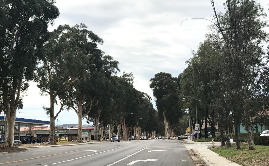Ramona's Eucalyptus Colonnade Today