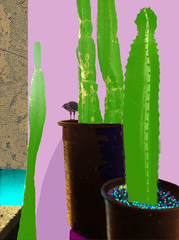 4 Vertical Cacti WEB.jpg