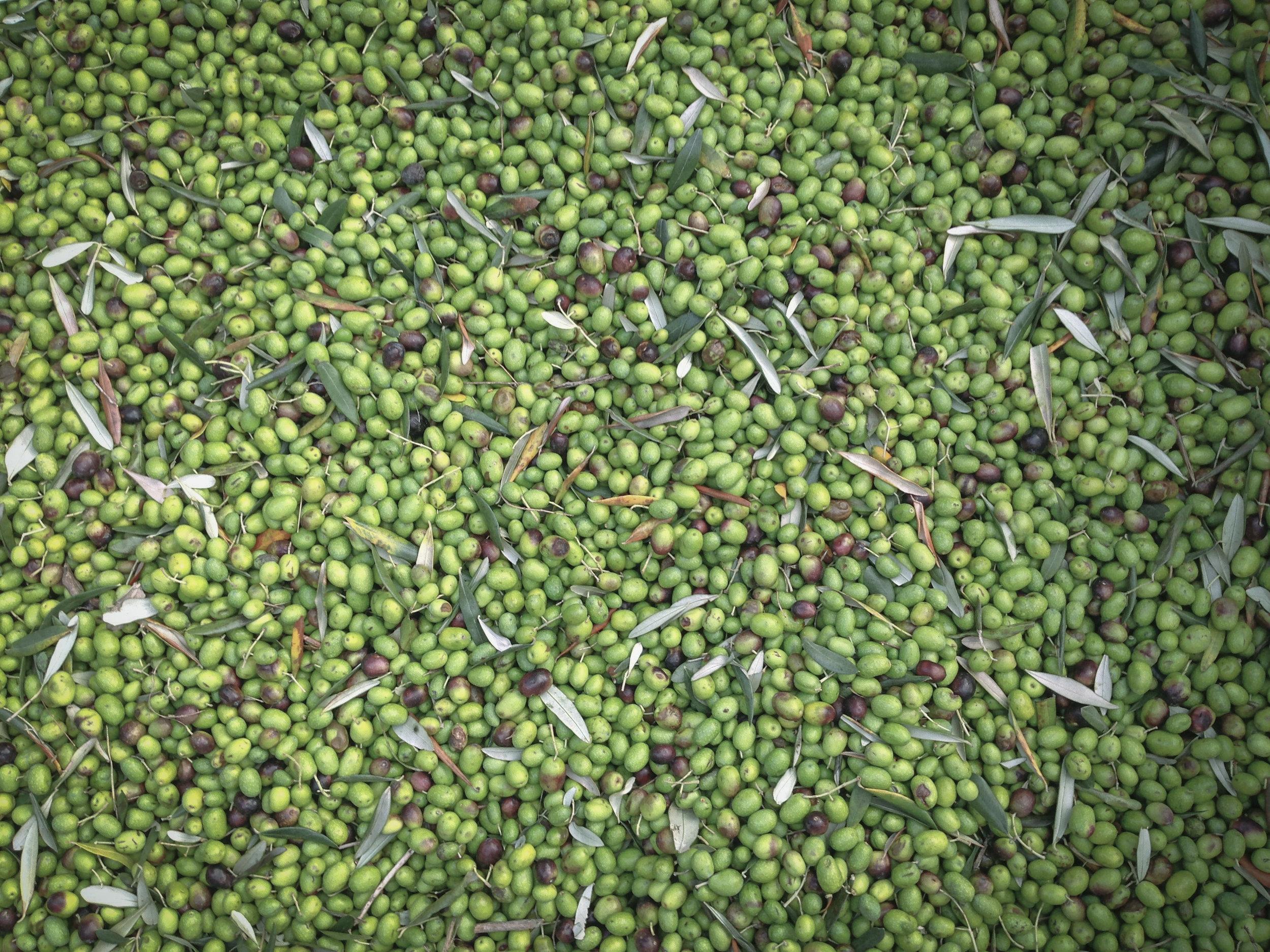 Nanda's Olives