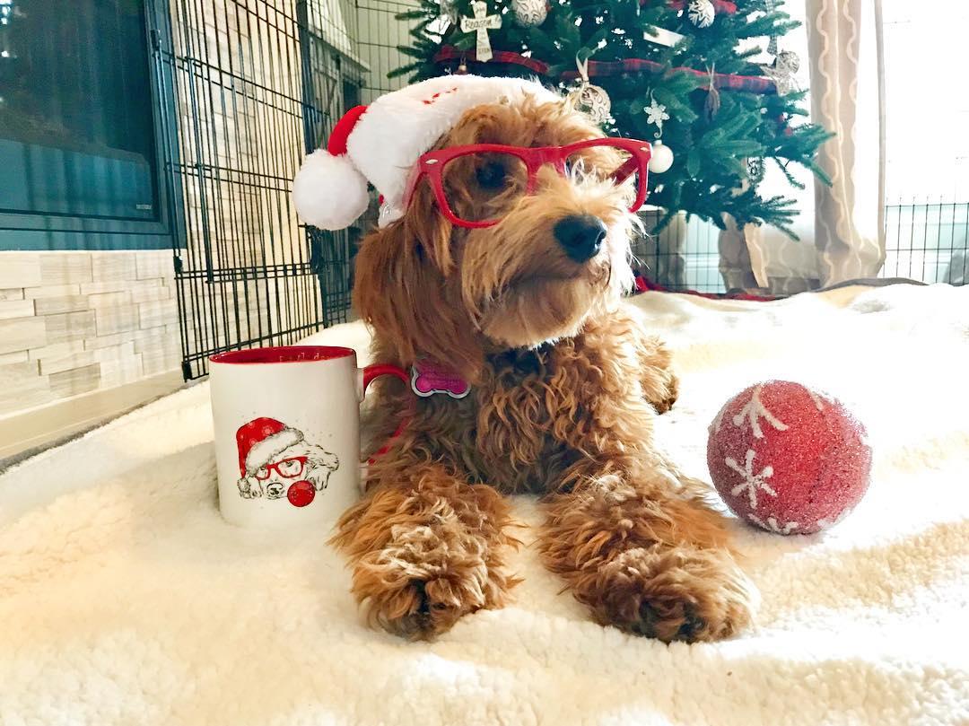Kirkland's - Christmas Dog Mug