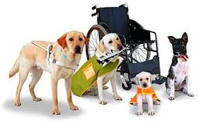 Service animals and the Law
