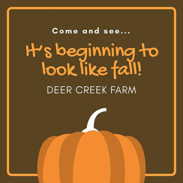 #fallfun #pumpkinlove #fallleaves #falldecor #deercreekfarmbycompassionplanet #purchasewithapurpose