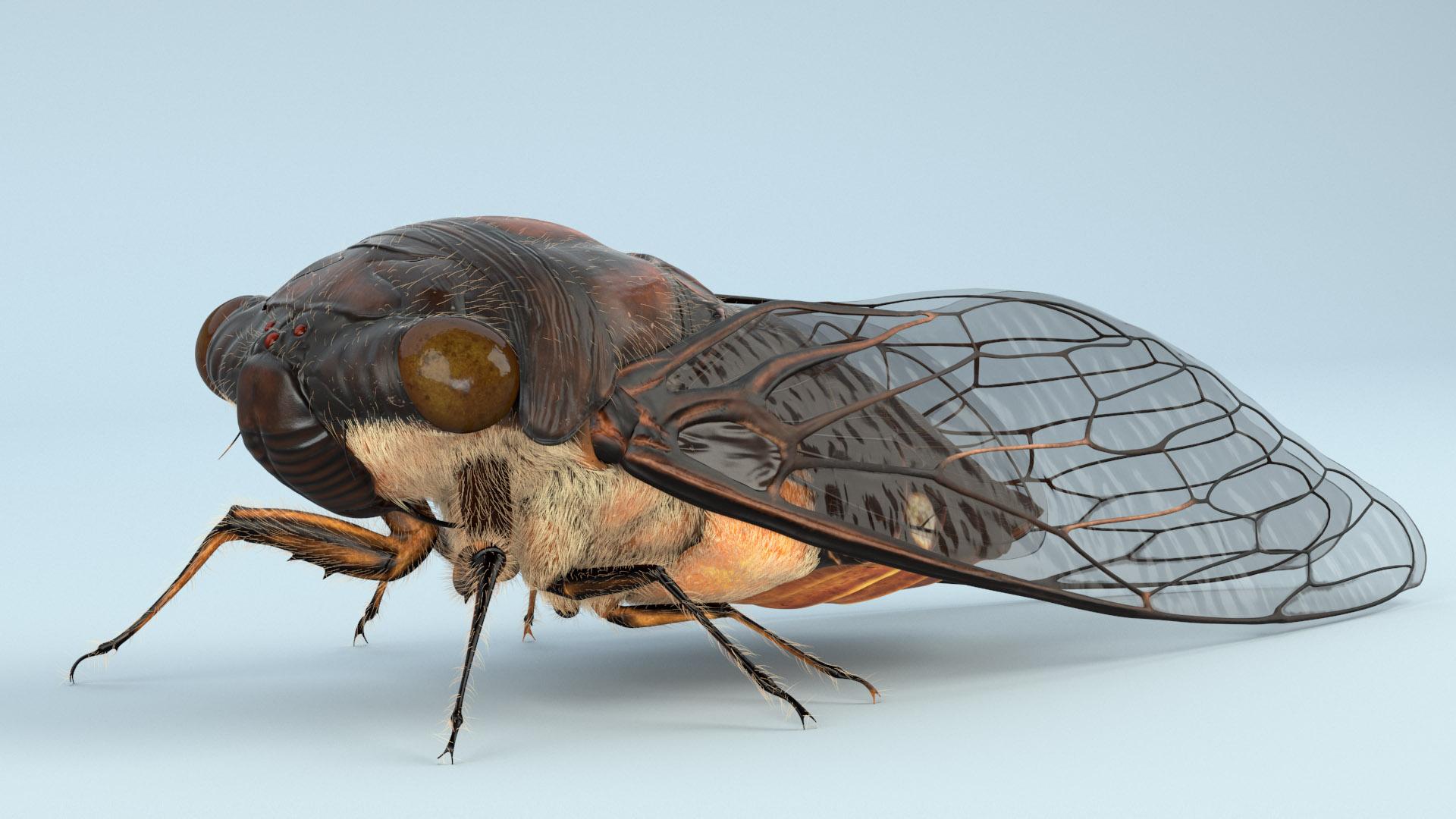 Character Design - Cicada 01.jpg