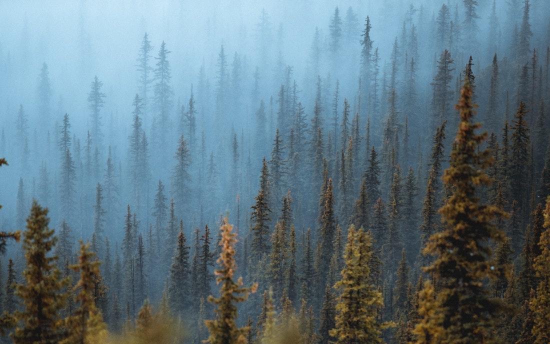 Forest Banff.jpg