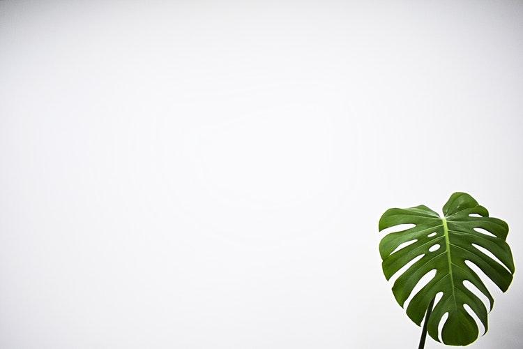 Green leaf on white.jpg