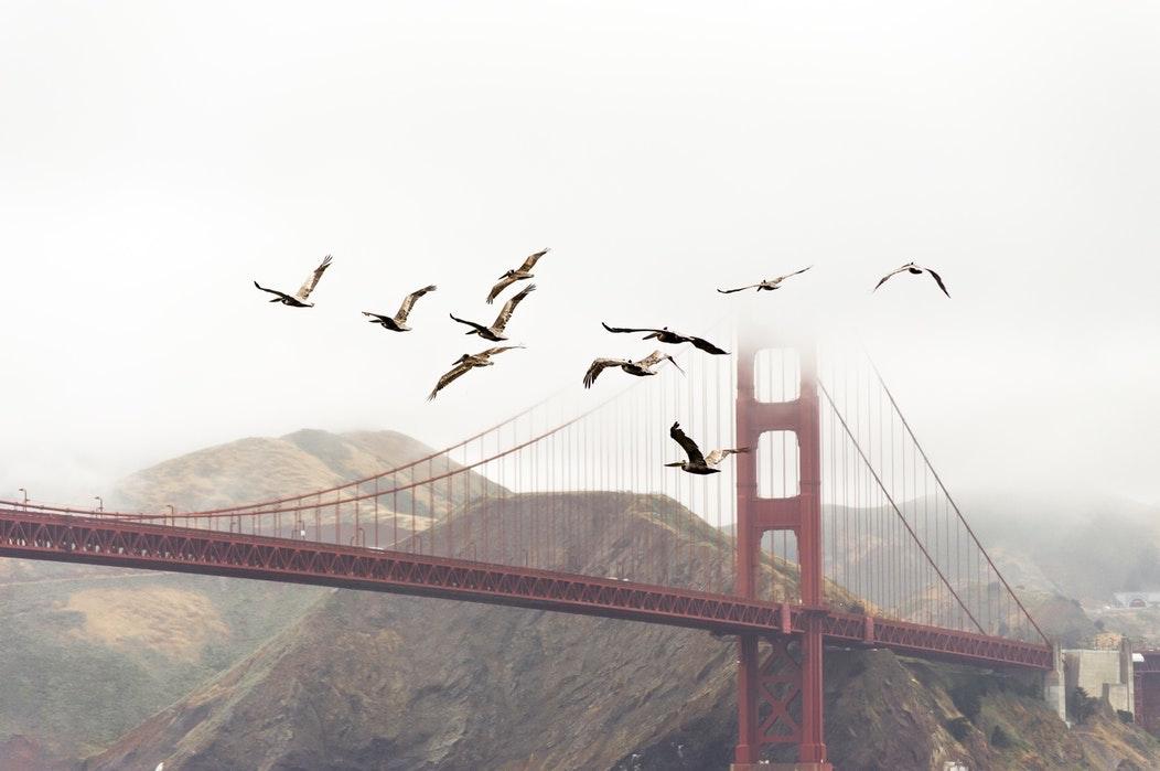 Seaguls and Golden Gate Bridge.jpg