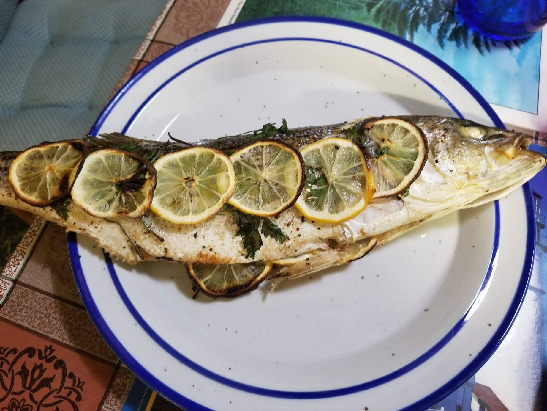 meg fish 1.jpg
