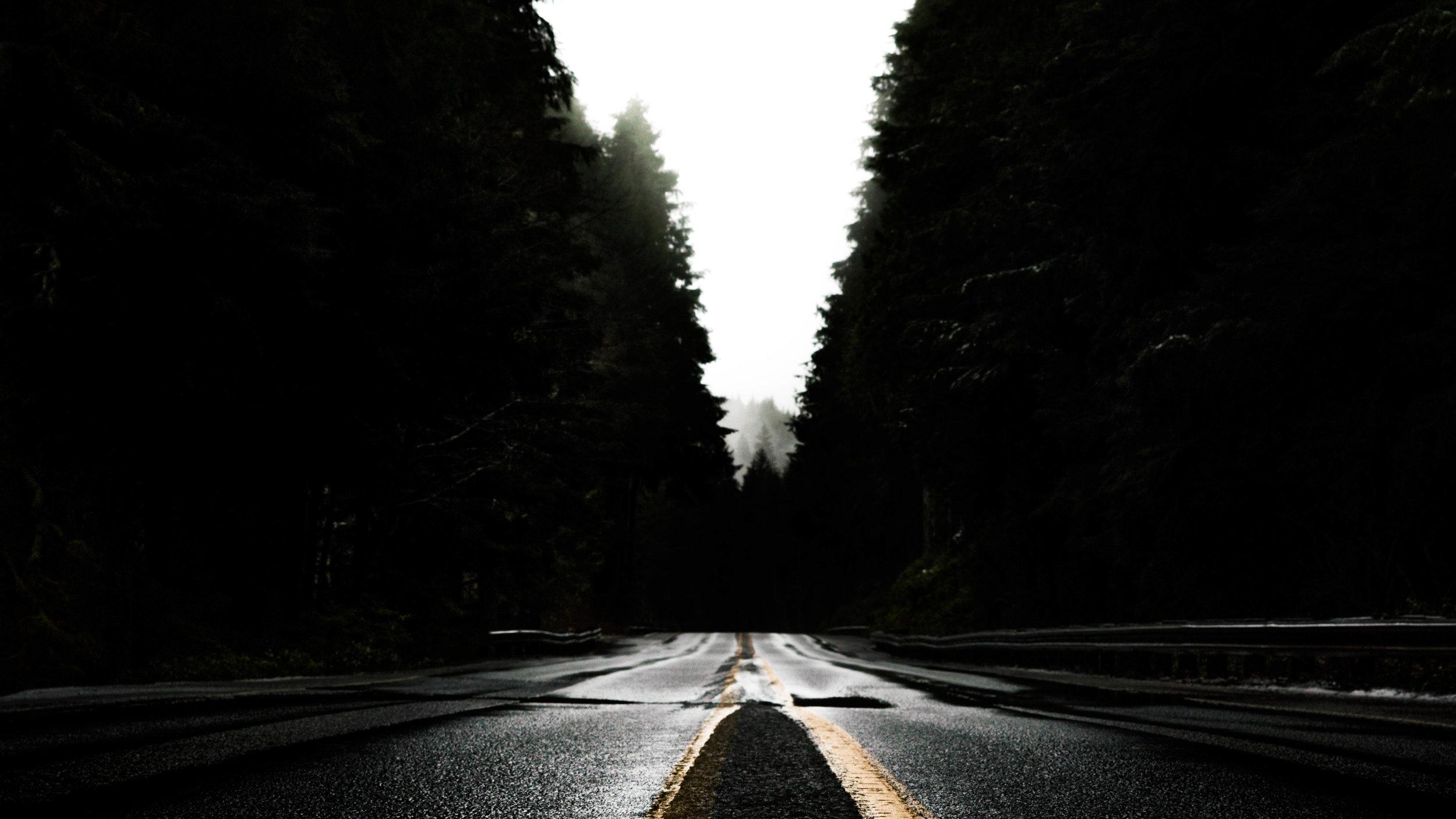 Redwoods Road.jpg