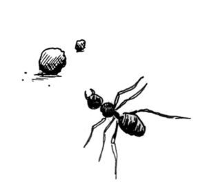 ignore-ants.png