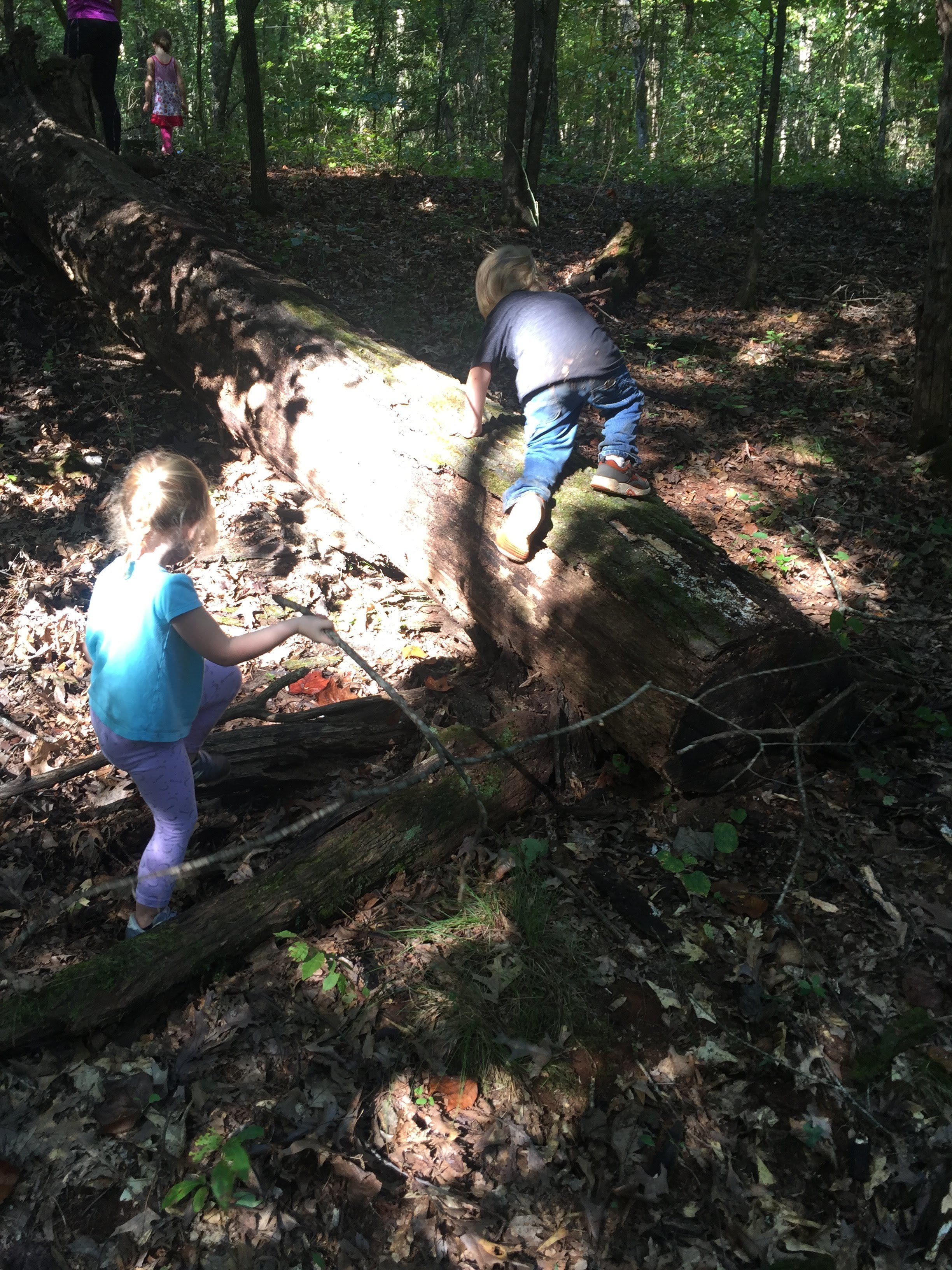 Mabry and Maddux lining up to walk up the wiggly tree, the children's own discovery.