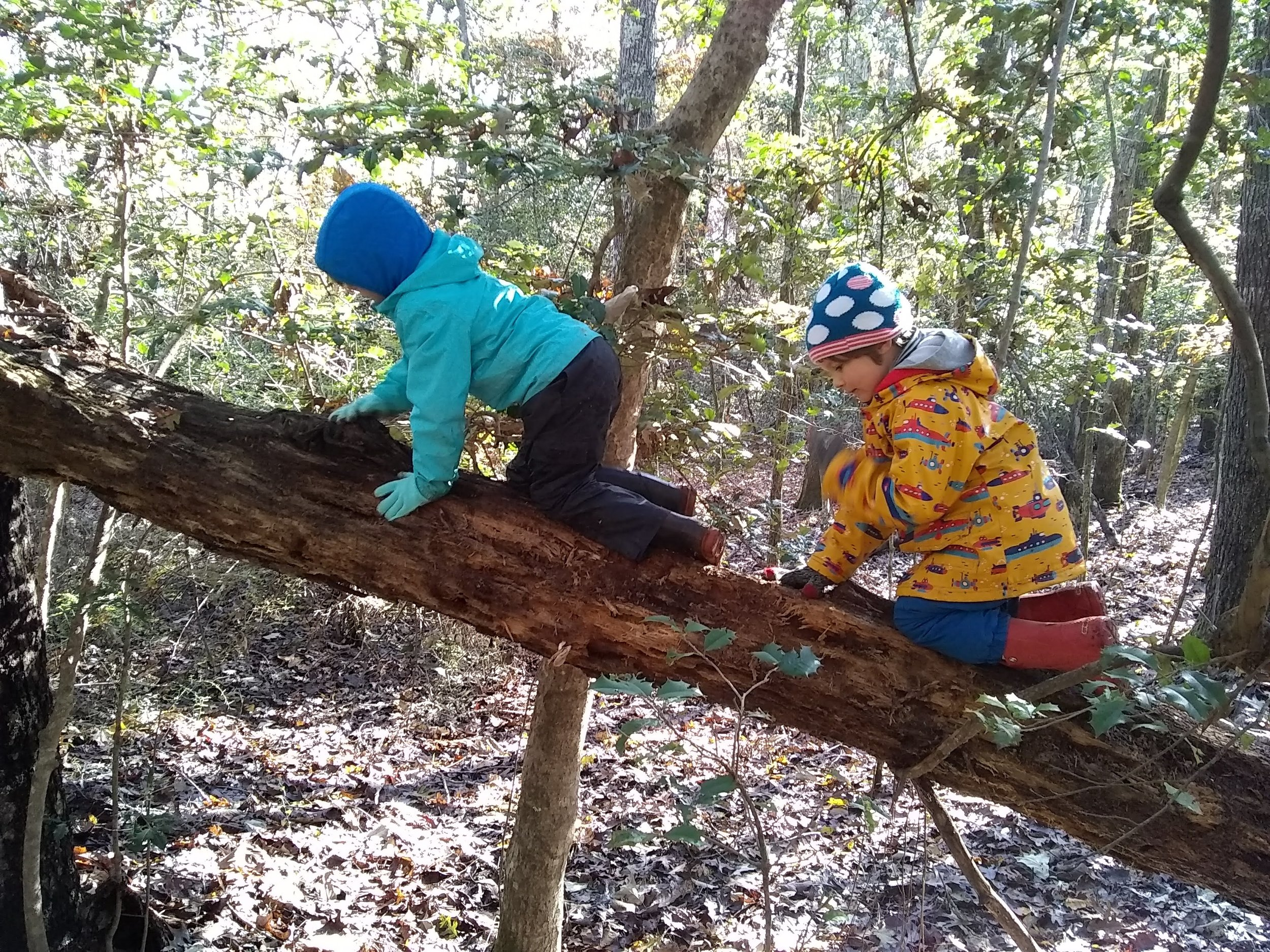 Wendell and Sammy climbed to an area where they can get lost in conversation and imaginative play.