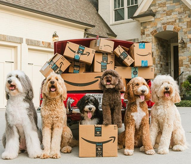 It's an add to cart kind of day 🛒📦 #thatdoodsquad #primeday @amazon 📷: @shelbyraephotographs• • Check Stories for more!