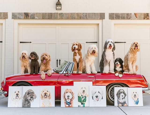 Canvas, canvas on the wall, who's the fluffiest squad of them all? 👩🏻‍🎨 #thatdoodsquad Portraits: @pawfectpaintings 📷: @shelbyraephotographs • • @pawfectpaintings painted our entire Squad! She is having a Christmas in July sale revealing new products, discounted favorites (go check out her glass ornaments), and much more!