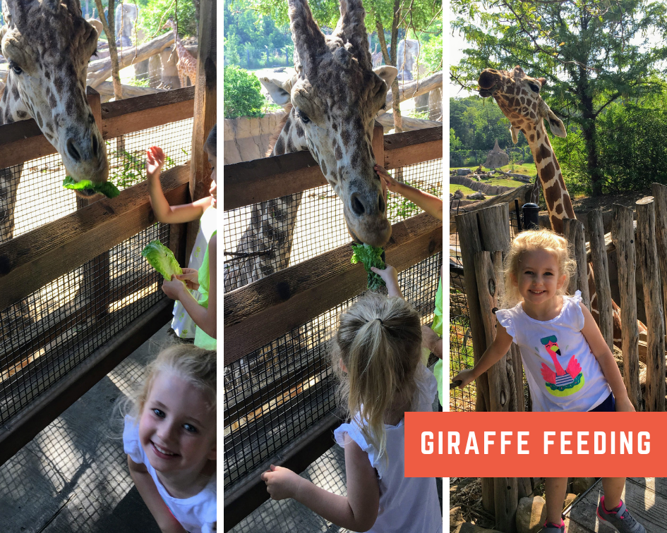 Giraffe Feeding.png