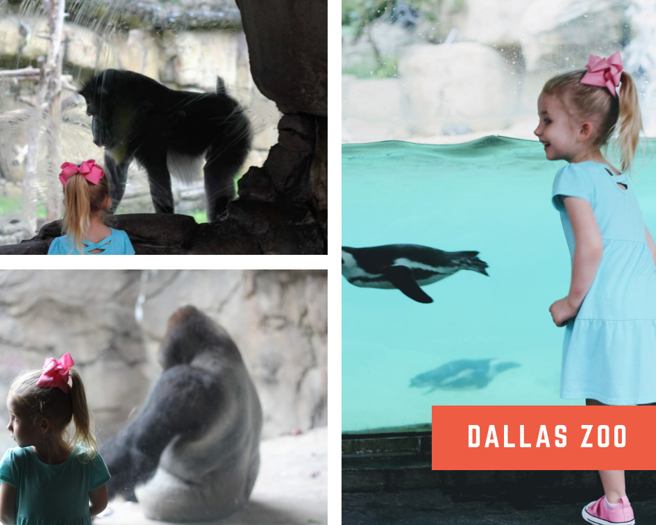 Dallas Zoo 1.png
