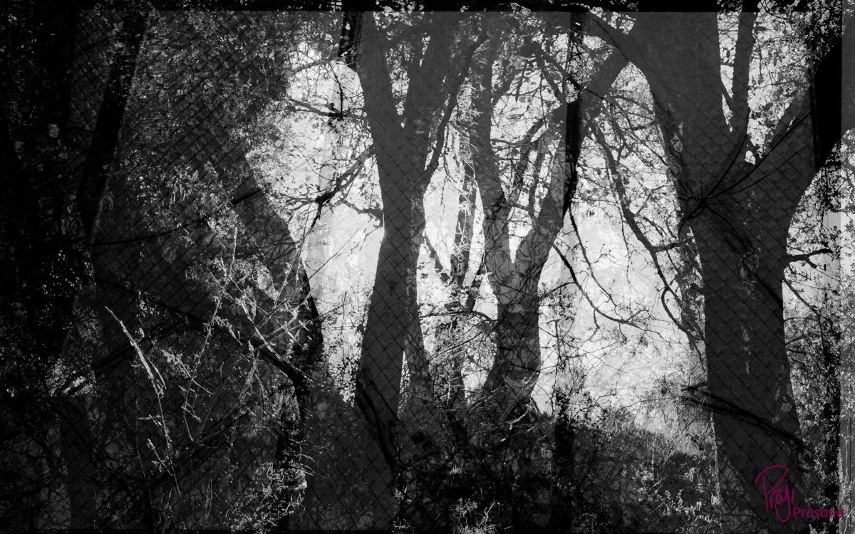 darkness_7A.jpg
