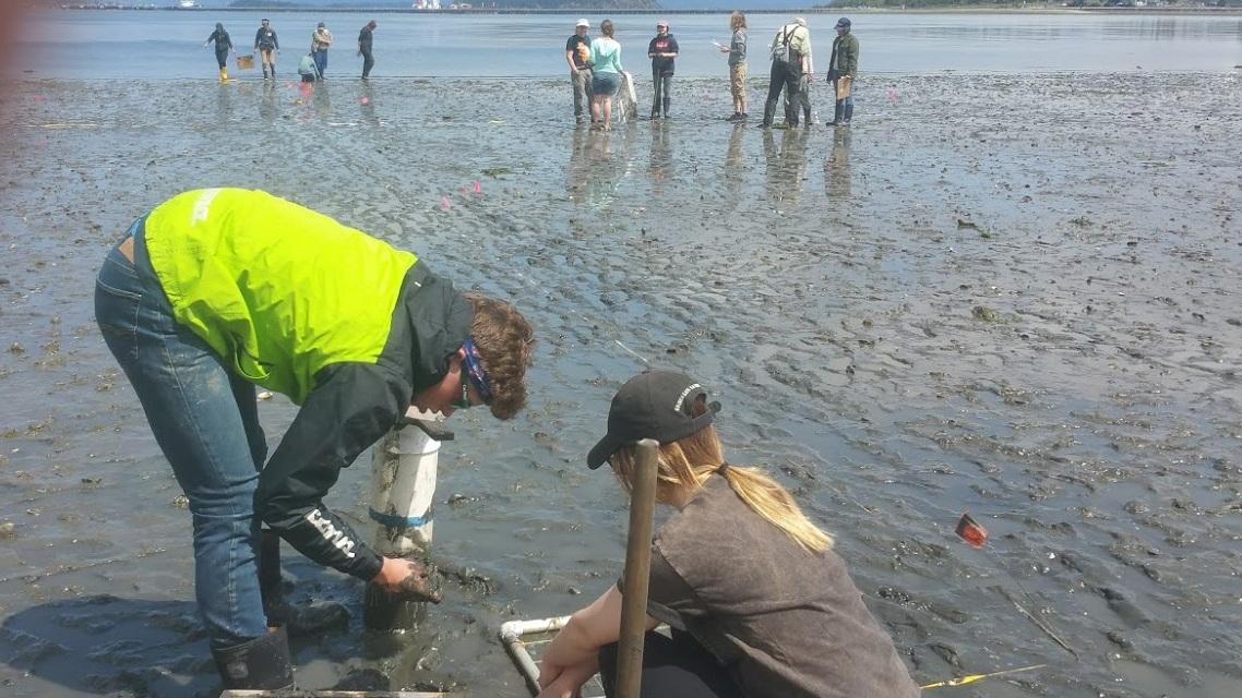 Calder and class getting muddy to monitor sealife in Fidalgo Bay, WA