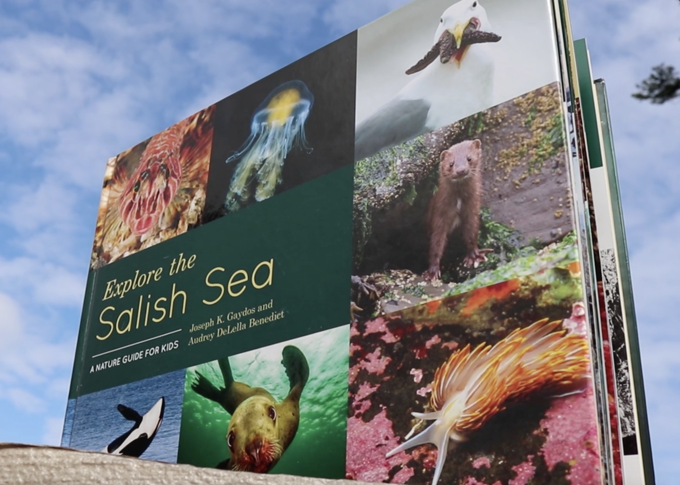 Adventure-filled, NGSS-aligned units to build ocean literacy in your students and communities, based on the Nautilus Award-winning book, Explore the Salish Sea A Nature Guide for Kids.  Find the book here.