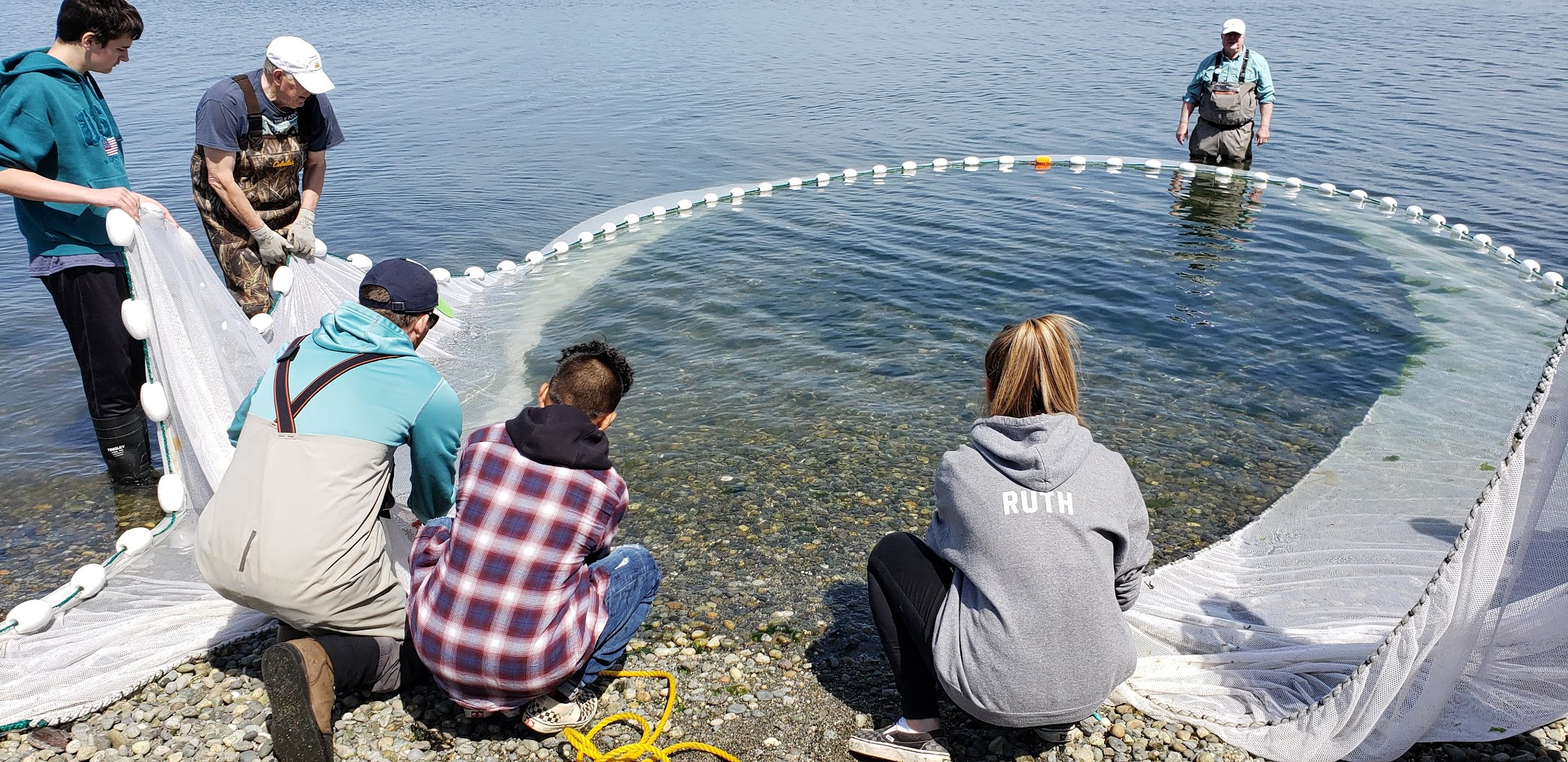 Conway School students investigate whether beach restoration is actually helping forage fish eggs to survive.