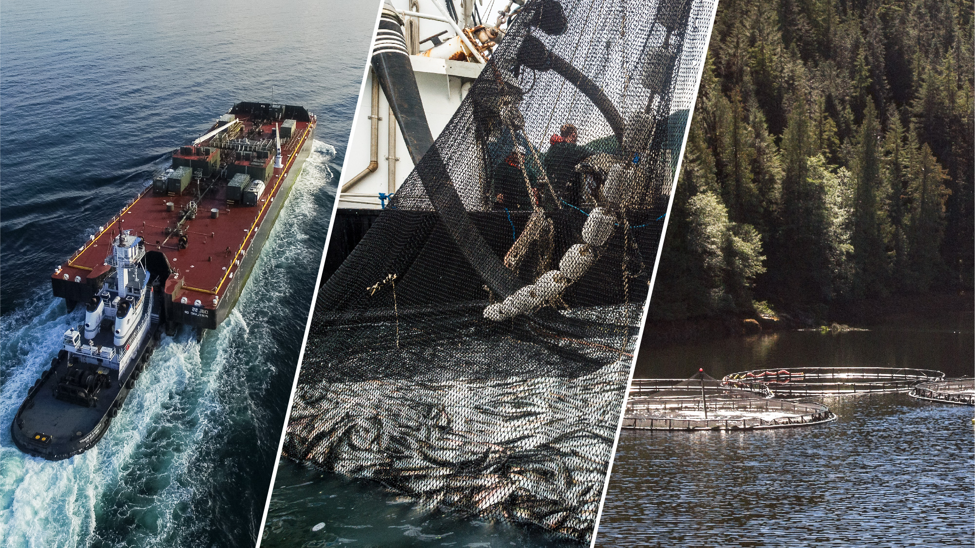 Industrial shipping   ,    fishing pressure    and    net pen salmon farms    all have an impact on the coastal ecosystem.