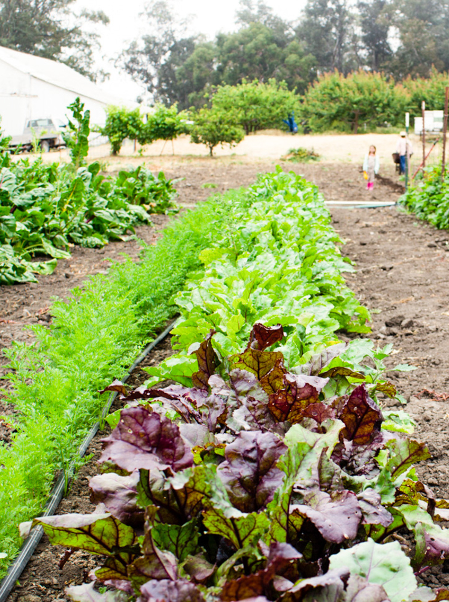 TheRanchTable_CommunityGarden-12.jpg