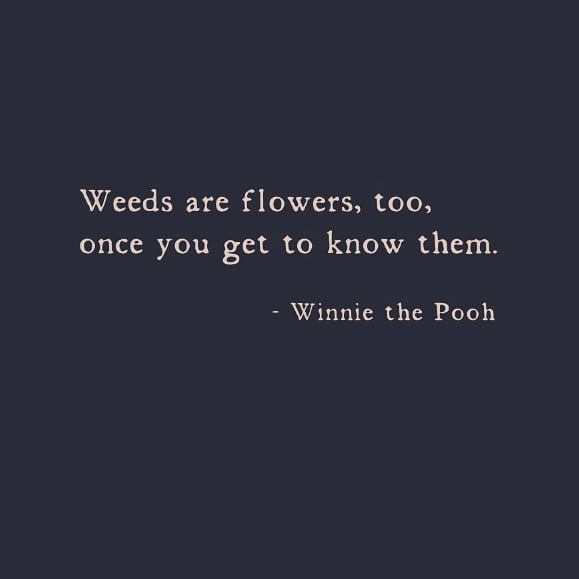 No one said it better than Winnie the Pooh 💚  #dolessharm #vildhave #vildmedvilje #bevarnaturen #biodiversity #biodiversitet #natureconservation #naturbeskyttelse #vildnatur #dknatur #dansknatur #dkgreen #haveliv #trädgårsliv #naturetherapy #naturewalks #beautiundermynose #seasonspoetry  #hverdagsaktivisme #everydayactivism #bynatur #bæredygtighed #sustainableliving #sustainablelifestyle #slownaturemoments #conciouslifestyle #greenlifestyle #klimaansvar #klimatosse