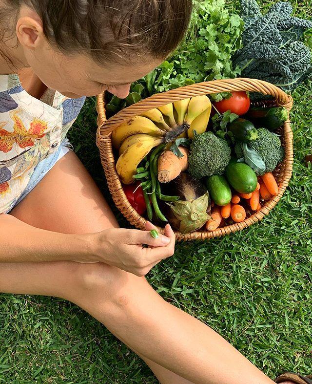 Organic produce = 🐛🐞🌿 . Weekly nourishing haul from @goodharvestorganicfarm 🌈 . . . #kawanafarmersmarket #goodharvest #organiclife #goodharvestoplanybasedeatsrganicfarm #fedforwellness #plantbasedeats #eattherainbow