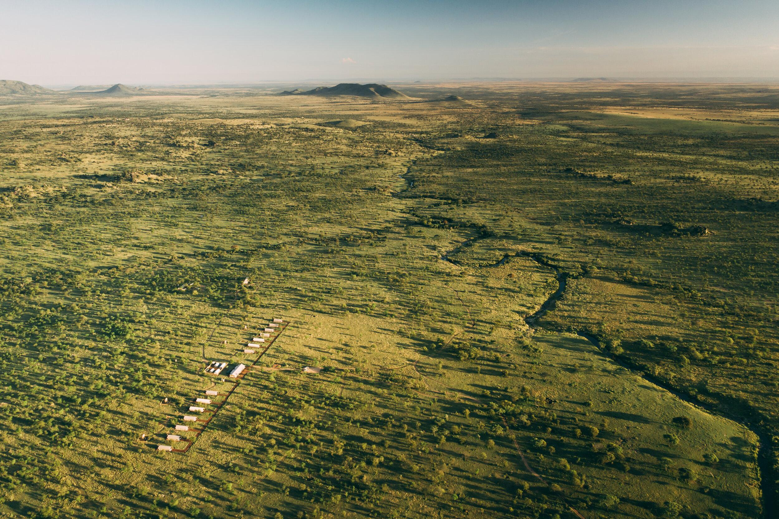 20190601_Tortilis_Serengeti_DJI_0771.jpg