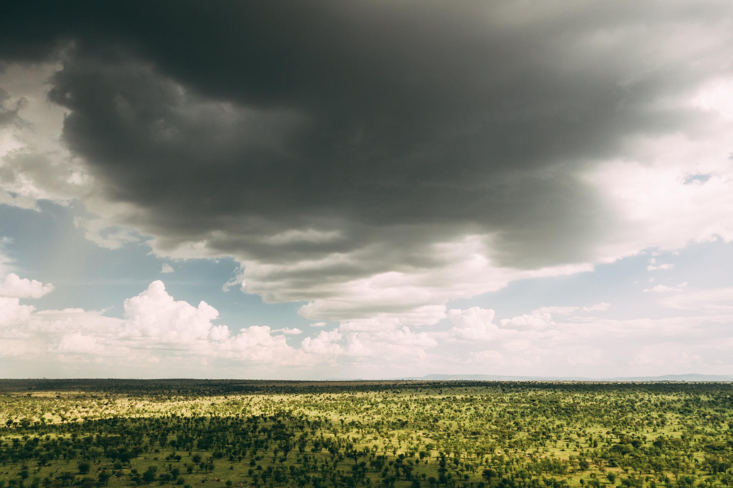 20190602_Tortilis_Serengeti_DJI_0789.jpg