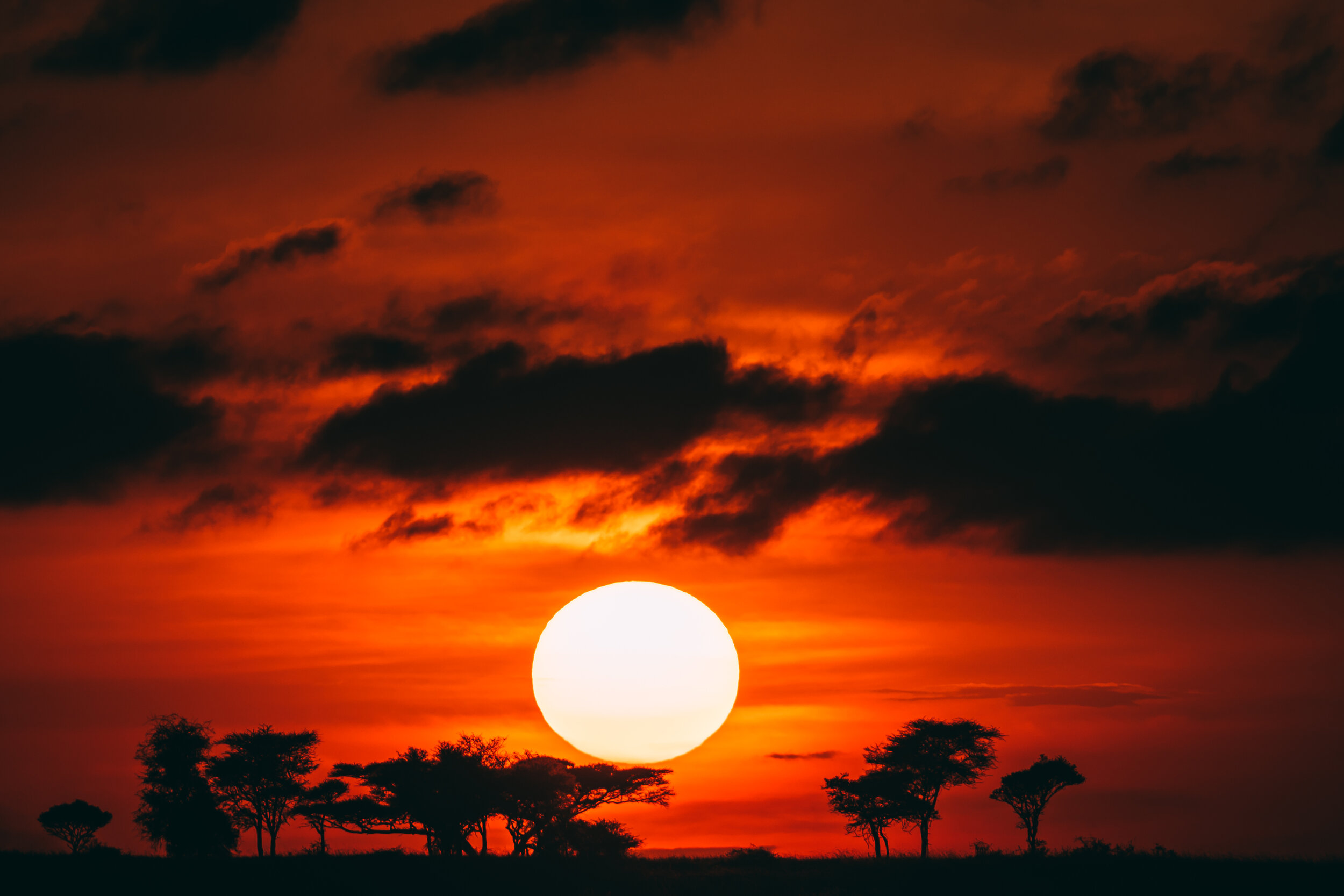 20190601_Tortilis_Serengeti_JHP00602.jpg