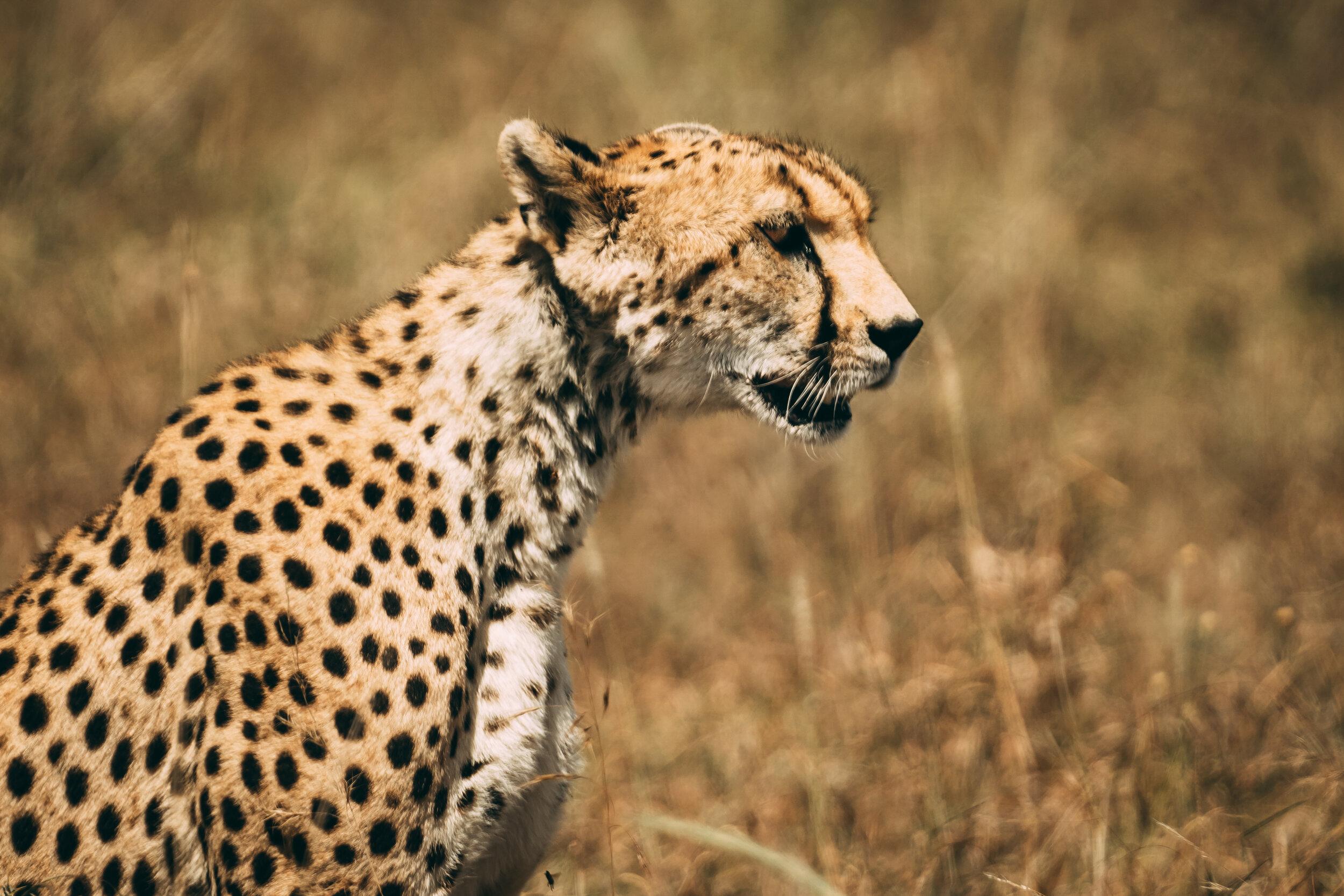20190601_Tortilis_Serengeti_JHP09806.jpg