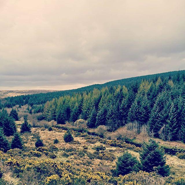Dartmoor . . . #dartmoor #nature #forrest #trees
