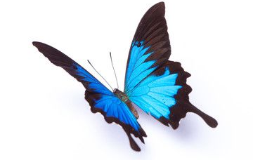 BW - Butterfly 3.png