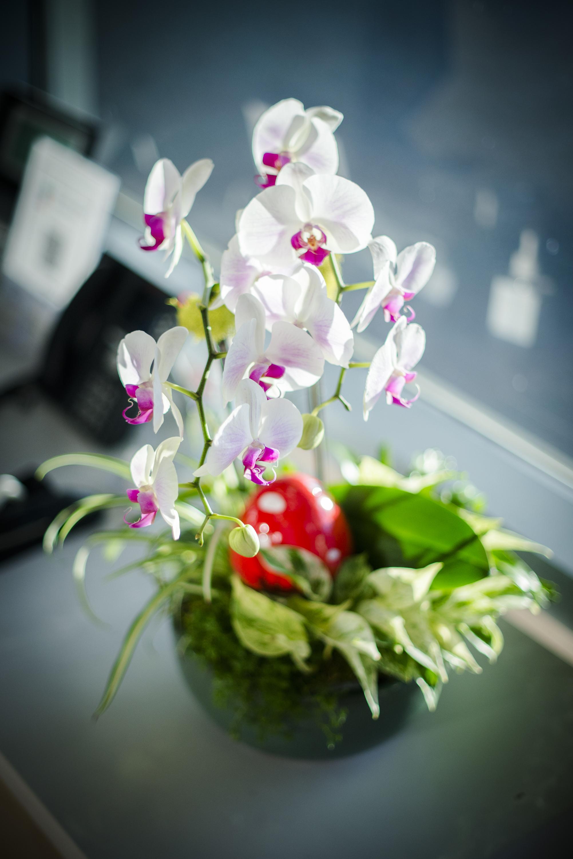 AddLife-Floral-Bowls-015.jpg