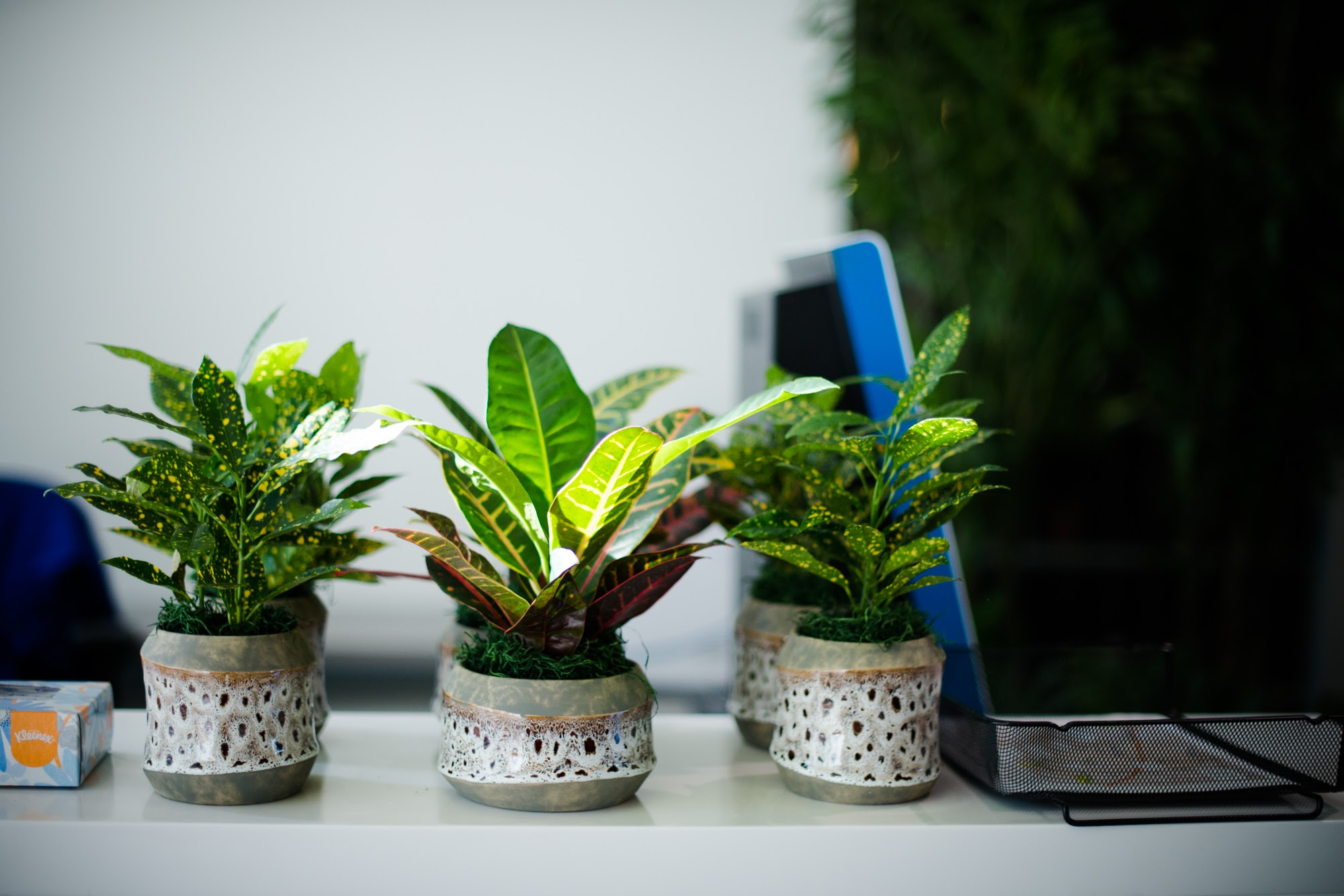 Table Top Foliage Plants.jpg