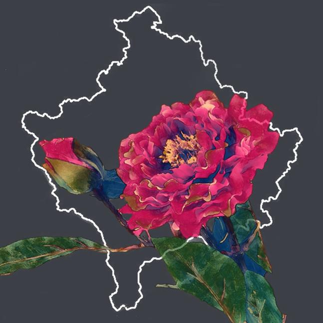XhF Logo .png