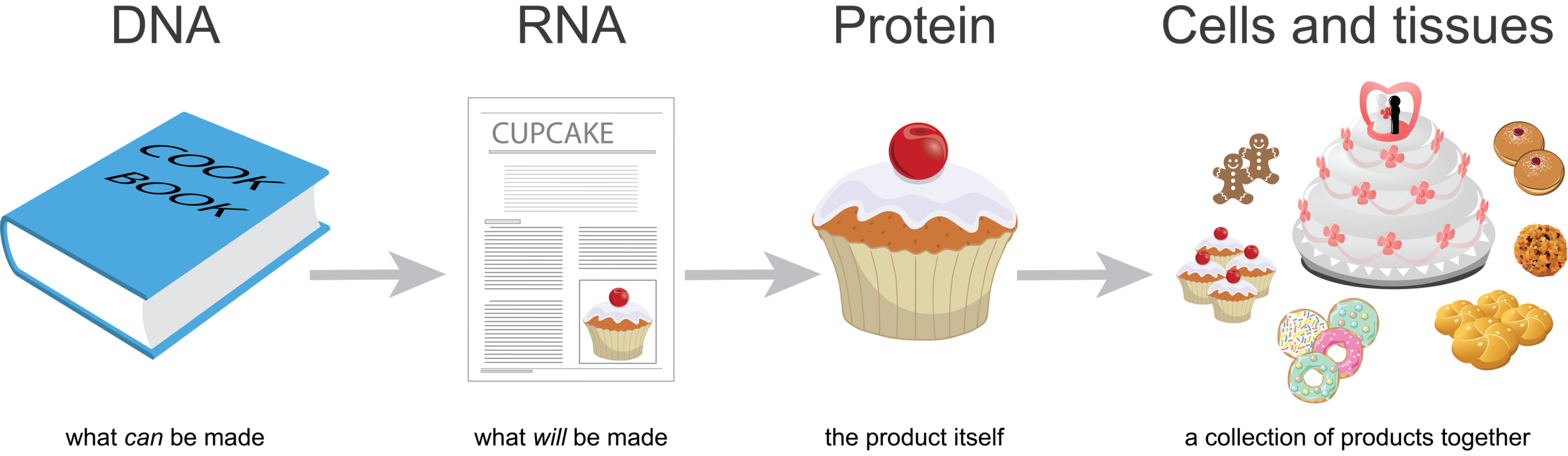 central-dogma-baking-analogy-top-panel.png