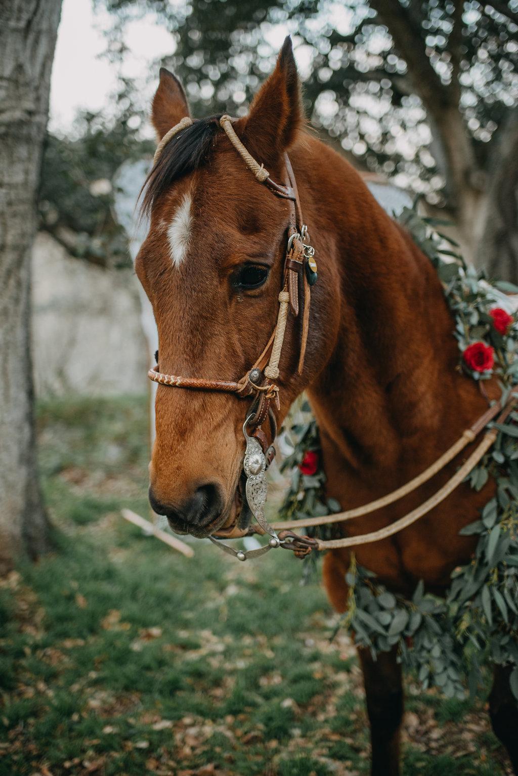 gorgeous horse boho wedding photo idea