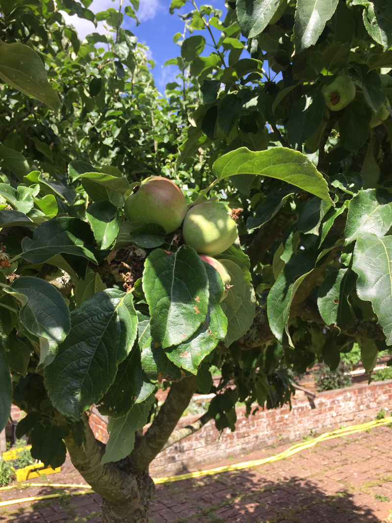 How To Prune Your Fruit Trees Another